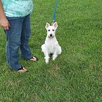 Adopt A Pet :: Wallace - East Hartford, CT