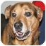 Photo 3 - Shepherd (Unknown Type) Mix Dog for adoption in Osseo, Minnesota - Taz