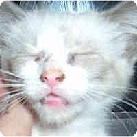 Adopt A Pet :: Billie Joe - Jacksonville, FL