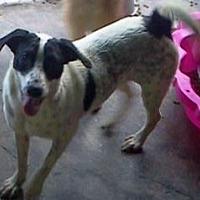 Pointer Mix Dog for adoption in Pembroke, Georgia - Addie