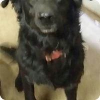 Adopt A Pet :: Sadie needs foster or home - Sacramento, CA