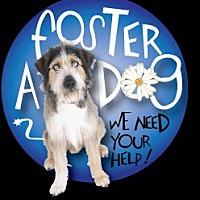 Adopt A Pet :: NEED FOSTERS in RHODE ISLAND - West Warwick, RI