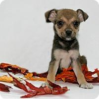 Adopt A Pet :: Lily - Lufkin, TX