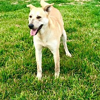 Adopt A Pet :: Mercy - Clifton, TX