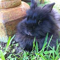 Adopt A Pet :: Rushmore - Williston, FL