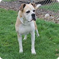 Adopt A Pet :: GARRET - Decatur, IL