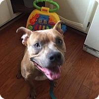 Adopt A Pet :: Alexa - Newfield, NJ