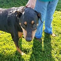 Adopt A Pet :: Satin - Colfax, IL