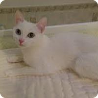 Adopt A Pet :: Zahyeet - Chicago, IL