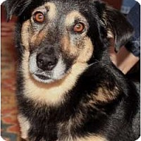 Adopt A Pet :: Rosie Wade - Glastonbury, CT