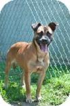 Boxer Mix Dog for adoption in Georgetown, South Carolina - Gertrude