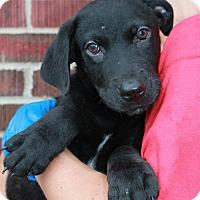 Adopt A Pet :: Roman - Southington, CT