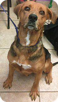 Hound (Unknown Type)/Shepherd (Unknown Type) Mix Dog for adoption in Kirby, Texas - Mariah