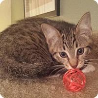 Adopt A Pet :: Rexxar - Irvine, CA