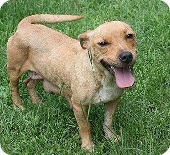 Basset Hound Mix Dog for adoption in Lufkin, Texas - Bambi