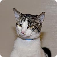 Adopt A Pet :: Jax - Medina, OH
