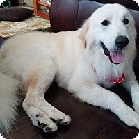 Adopt A Pet :: Duke of Austin - Kyle, TX