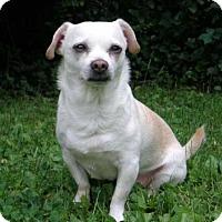 Adopt A Pet :: SAMMY - Hagerstown, MD