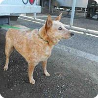 Adopt A Pet :: CHARLIE - Hanford, CA