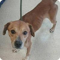 Adopt A Pet :: Gotti - Ashtabula, OH