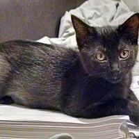 Adopt A Pet :: Luna - Wichita, KS