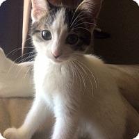 Adopt A Pet :: Penelope - Burlington, ON
