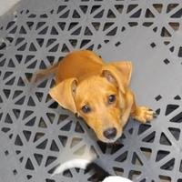Adopt A Pet :: Brantley - Amory, MS