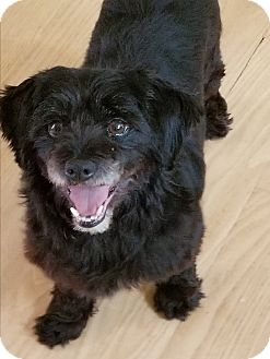 Terrier (Unknown Type, Small) Mix Dog for adoption in Oakton, Virginia - Clint