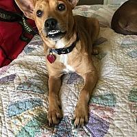 Adopt A Pet :: Dingo - Jesup, GA