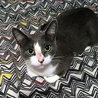 Adopt A Pet :: Whitney - Mississauga, Ontario, ON