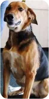 Hound (Unknown Type) Mix Dog for adoption in Kalamazoo, Michigan - Linus