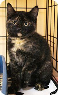 Domestic Shorthair Kitten for adoption in Medford, Massachusetts - Charlie