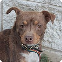 Adopt A Pet :: Rico - Stilwell, OK