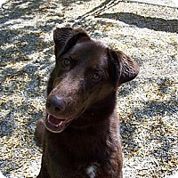 Adopt A Pet :: Hannah BEAUTIFUL AND LOVING - Antioch, IL