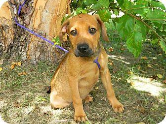 Hound (Unknown Type) Mix Puppy for adoption in Tyner, North Carolina - Antonio