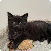 Adopt A Pet :: Jory - Speonk, NY