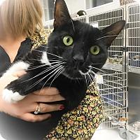 Adopt A Pet :: Shaden - Webster, MA