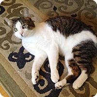 Adopt A Pet :: Monty - Vancouver, BC