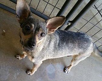 Terrier (Unknown Type, Medium) Dog for adoption in Stockton, California - Nala