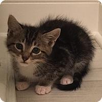 Adopt A Pet :: Mahjong - Duluth, GA