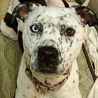 Adopt A Pet :: Frankie - Bakersfield, CA