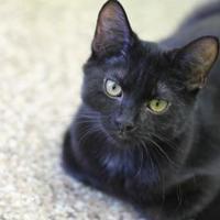 Adopt A Pet :: Bert - Pratt, KS