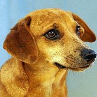 Adopt A Pet :: Isabella - Maynardville, TN