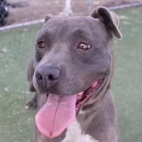 Adopt A Pet :: *PHOENIX - Las Vegas, NV