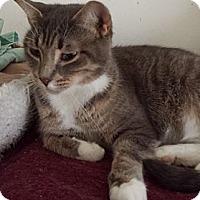 Adopt A Pet :: Ally - Orillia, ON