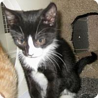 Adopt A Pet :: Clio - Dallas, TX