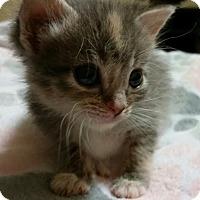 Adopt A Pet :: Cherokee - McDonough, GA