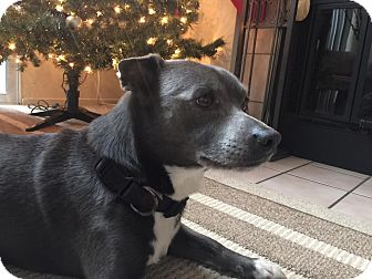 Terrier (Unknown Type, Small) Mix Dog for adoption in Lafayette, California - Dusty