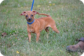 Dachshund Mix Dog for adoption in Pikeville, Maryland - London