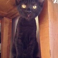 Adopt A Pet :: Bandit - Orange, CA